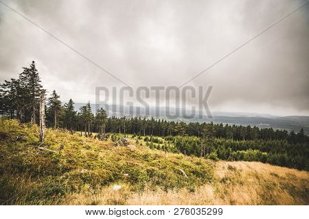 Pine Tree Forest On A Hillside In Misty Cloudy Weather With A Large Grass Area