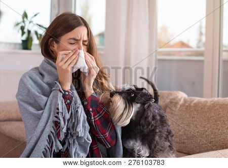 Young Woman Sitting On Sofa At Home Covered With Blanket With Dog Beside Her And Sneezing. Cold And