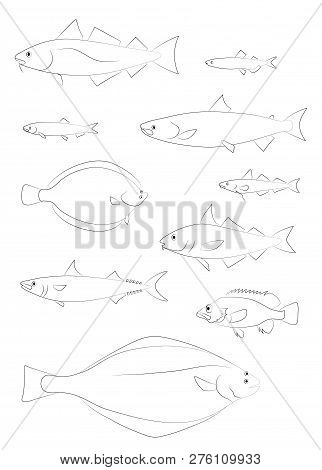 North Atlantic Fish Vector Photo Free Trial