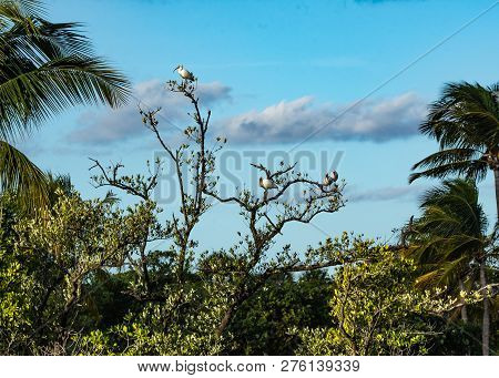 Background of ibises resting in a tree top in Florida wetland with mangrove and palm trees against a blue cloudy sky.