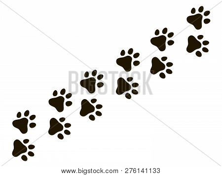 Cats Paw Trail. Footprints Wolf Cat Dog, Puppy Trails Nature Print Vector Pattern And Background