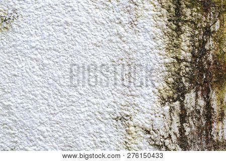 Mold On White Background, Fungus On White Background, Bacteria On White Surface, Mold Growth On Whit