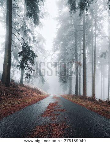 Mystical dark road in a foggy forest.