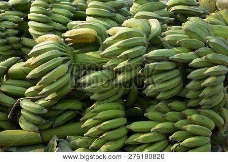 poster of Close up of a bunch of green Indian banana (Musa acuminata, Musa balbisiana, and Musa  paradisiaca ) selective focusing
