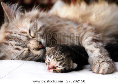 Mother cat and newborn kitten hugs