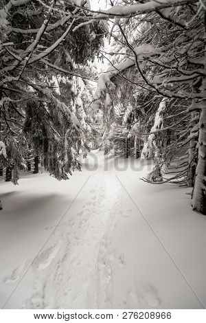 Snow Covered Hiking Trail In Winter Forest Near Malchor Hill On Lysa Hora Mountain Groupin Moravskos
