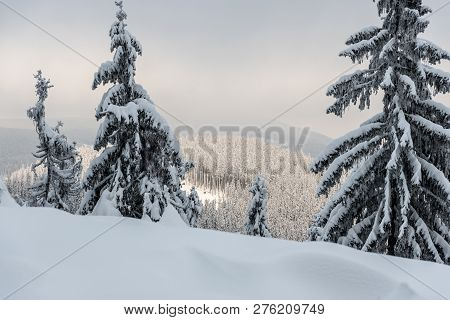 Winter Scenery With Snow, Few Spruce Trees On The Frontyard Andkozi Hrbet Hill Covered By Frozen For