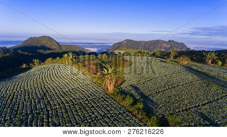 Farmland Vegetation On The Hills Of Northern Thailand