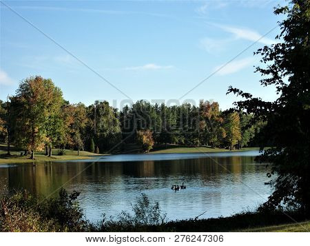 Geese Floating On The Lake At Vastwood Park On An Autumn Afternoon In Kentucky.