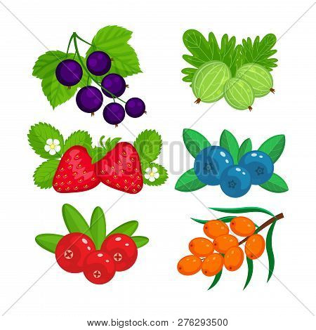 Set Of Garden Berries Vector Illustration Isolated On White Back