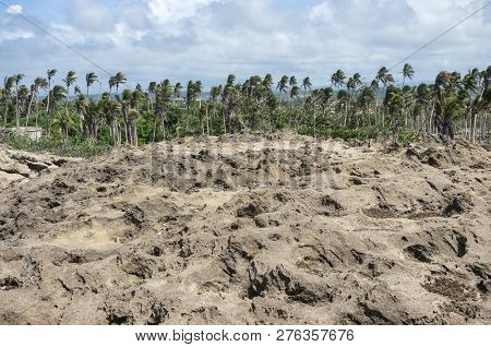 Rock Formation And Coastal Woodland At Cueva Del Indio Outside Arecibo On North Coast Of Puerto Rico