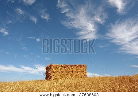 Harvest time: haybale in the fields