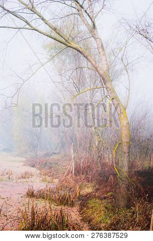 A Tree With Moss Growing On It. Bare Tree With Background Fog. Atmospheric Woodland With Fog.