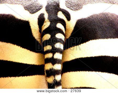 Zebra's Butt
