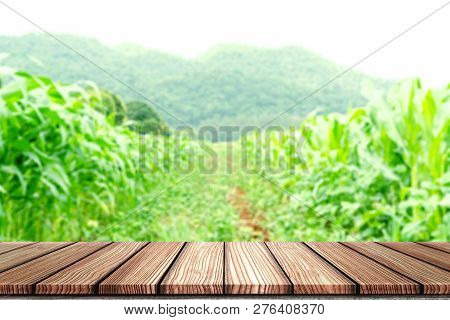 Empty Wooden Board Top Table In Front Of Blurred Corn Field Background. Perspective Wood In Blurred