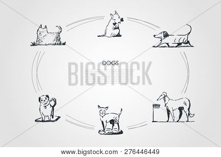 Dogs - Different Dog Breeds Walking, Eating From Bowl, Playing With Bone, Sitting On Grass Vector Co