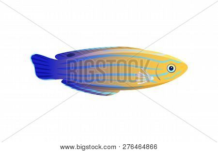 Striped Yellow And Blue Wrasse Isolated On White, Vector Illustration Of Pretty Marine Inhabitant, G