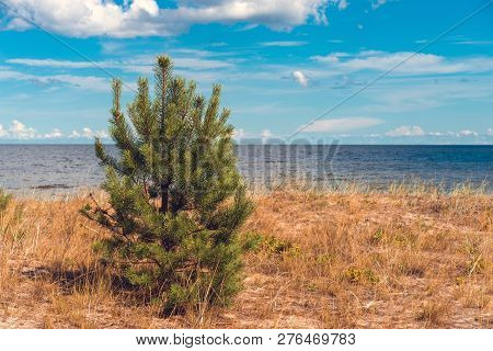 Baltic Sea Landscape Grass Pine Sky Clouds