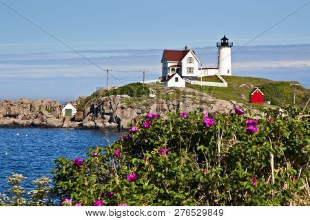 Nubble (cape Neddick) Lighthouse Lies A Few Hundred Feet Away From The Shore Covered With Beach Rose