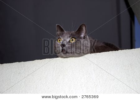 Yellow Eyed Gray Cat
