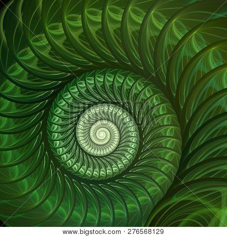 Abstract Fractal Spiral. Shell Background, Spiral Symmetry Fibonacci Shell Section. Half Cross, Gold