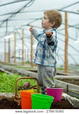 Learning Ecology. Small Boy Learning Ecology In Greenhouse. Learning Ecology While Working With Plan