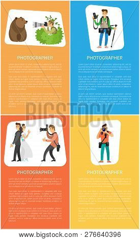 Photographer Making Pictures Of Wild Bear, Wedding Couple. Paparazzo Photojournalist With Profession
