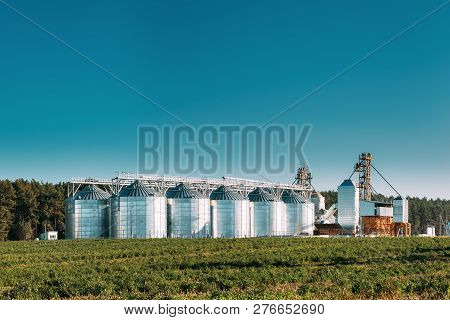 Granary, Grain-drying Complex, Commercial Grain Or Seed Silos In Sunny Summer Rural Landscape. Corn