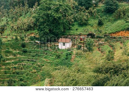 Beautiful Scenic Summer View Of Rose Flowers Plantation On Hillside In Botanical Garden In Batumi, A