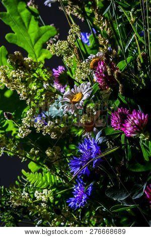 Bouquet With Clover, Cornflower And Daisies. Flowers On Dark Background. Nature Flower. Rural Flower