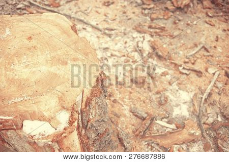 Top View Of Tree Stump. Soft Focus Wooden Stump Sawdust Background Texture Concept With Empty Space