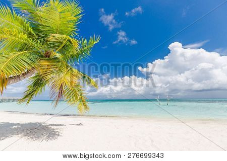 Tropical Beach Background As Summer Landscape With Beach Palm Trees And White Sand And Calm Sea For