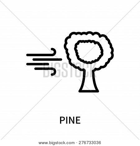 Pine Icon Isolated On White Background. Pine Icon Simple Sign. Pine Icon Trendy And Modern Symbol Fo