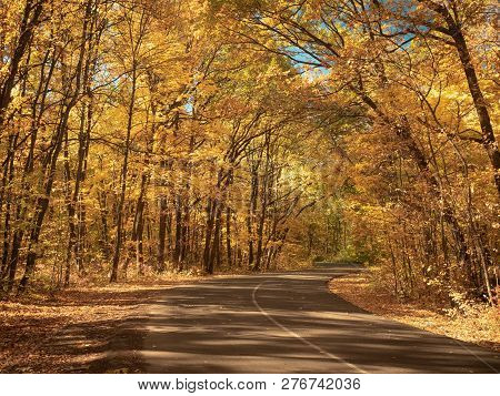 Windy Asphalt Road In Forest. Nature Landscape. Autumn Forest In October. Trees With Yellow Leaves M