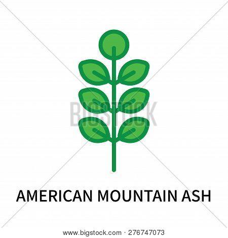 American Mountain Ash Icon Isolated On White Background. American Mountain Ash Icon Simple Sign. Ame