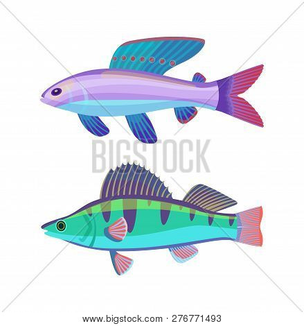 Rare Aquarium Wrasse Specie. Violet-blue Creature With Spotted Fin And Green Striped Perch Fish Vect