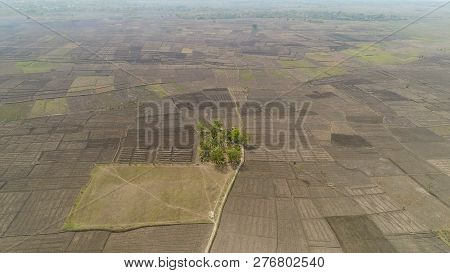 Aerial View Agricultural Land After Harvest. Agricultural Land Farmlands, Fields With Crops, Trees.
