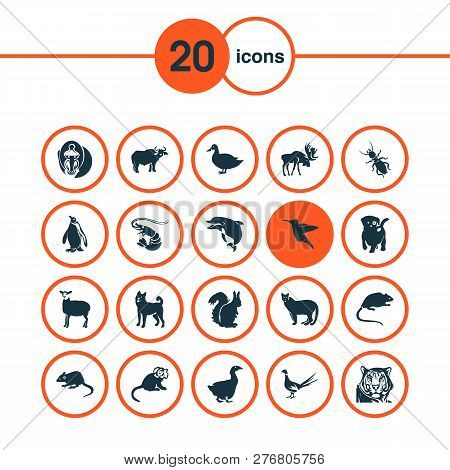 Zoo Icons Set With Hummingbird, Puma, Thermit And Other Dog Elements. Isolated Vector Illustration Z