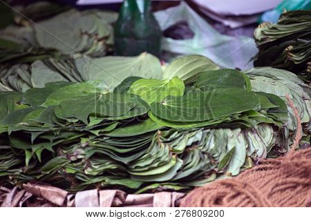 Stack Of Betel Leaves Or Piper Betle Kept At Home