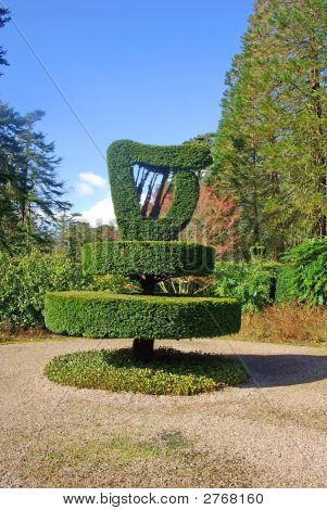 Harp Shaped Bush