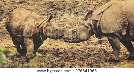 Beautiful Retro Photography Of One Horned Rhinoceros. Old Photo. Close Up Photo Of An Adult Rhino An