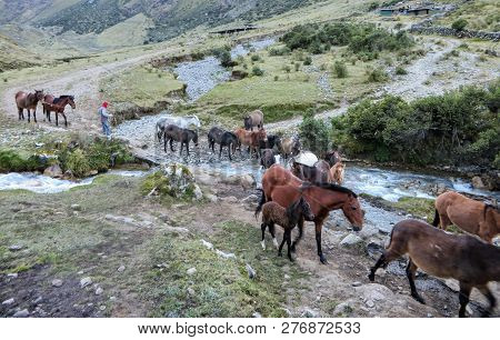 Salkantay, Trail, Cusco Province, Peru - May 8th, 2016: A Team Of Horses, Led By Their Local Inca Gu