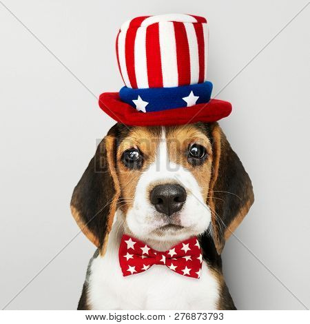 Cute Beagle puppy in Uncle Sam hat and bow tie poster