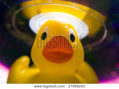 Rubbery duck