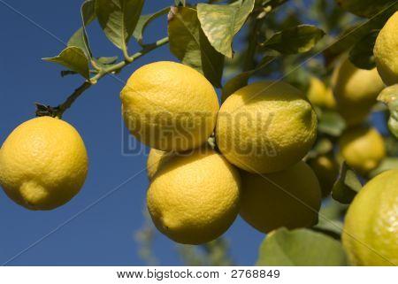 Lemon Cluster