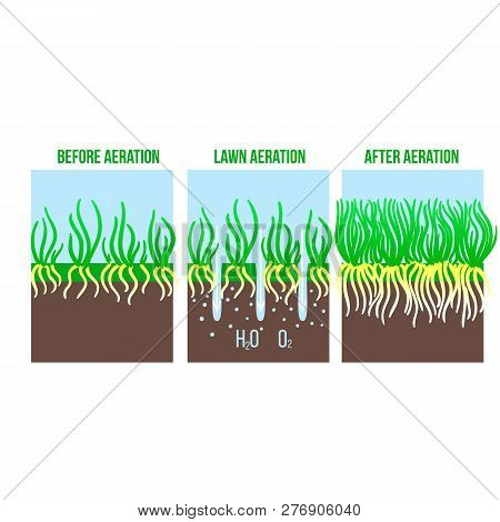 Lawn Aeration Stage Illustration. Gardening Grass Lawncare, Landscaping Service. Vector Isolated On