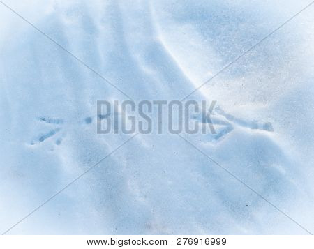Bird Trail On Pure White Snow. Trail Of Crows In The Snow