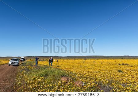 Nieuwoudtsville, South Africa, August 28, 2018: Tourists And Vehicles In A Field Of Wildflowers At M
