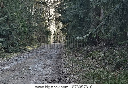 View Of Forest Road, South Bohemia, Czech Republic