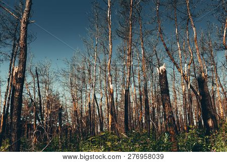 National Environmental Problems, Environmental Pollution, Dead Forest, Harmful Production, Barbaric